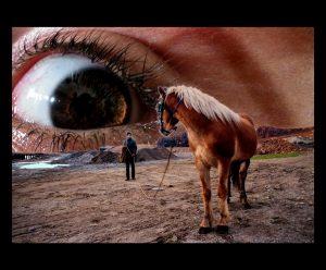Sadık İncesu / Atın Hayali , İnsanın Hayali